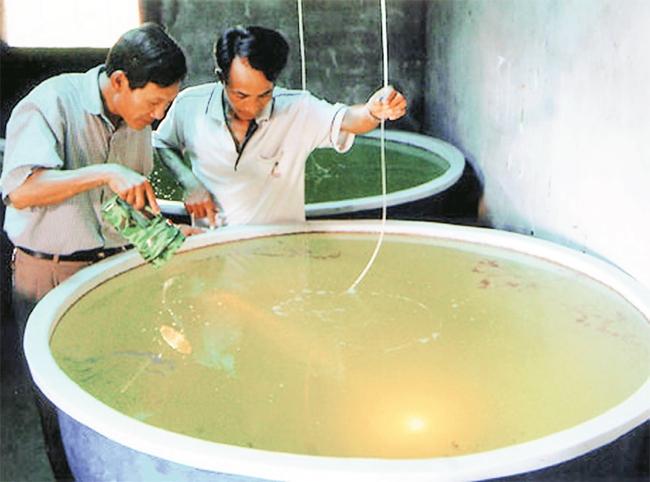 Kiểm tra cua giống tại Trung tâm Giống hải sản Nam Định (xã Bạch Long, Giao Thủy, Nam Định). Ảnh: HUY HÙNG