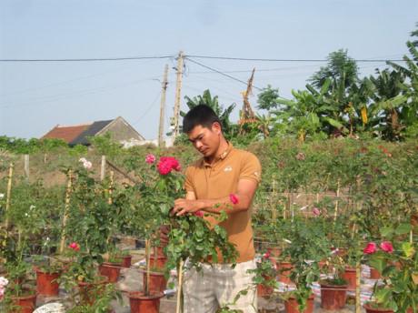 Anh Trọng chăm sóc cây hoa hồng