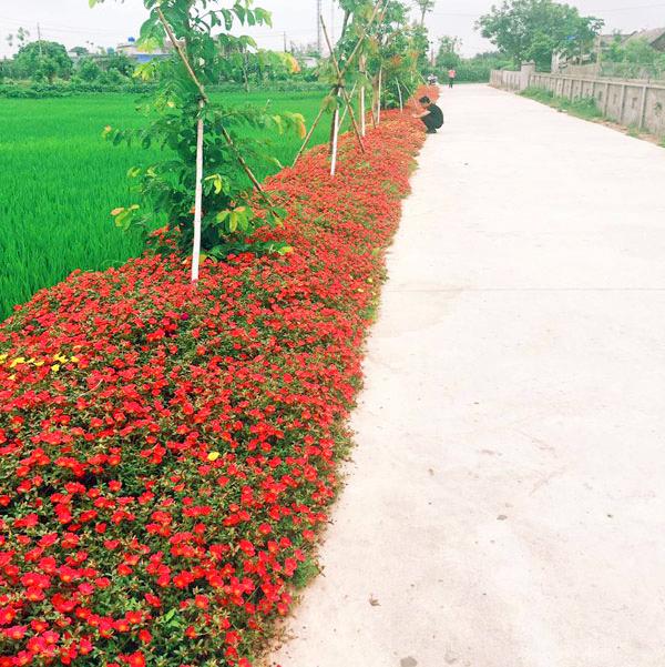 Sắc hoa thơ mộng trên đường làng