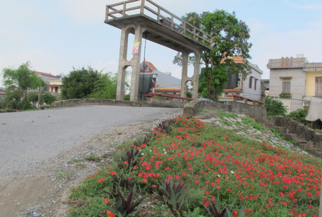 Hoa được trồng ở ven sông bên những cây cầu