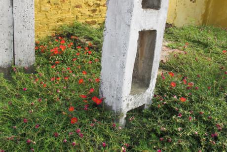 Những cột điện được tô điểm thêm sắc màu của loài hoa mười giờ