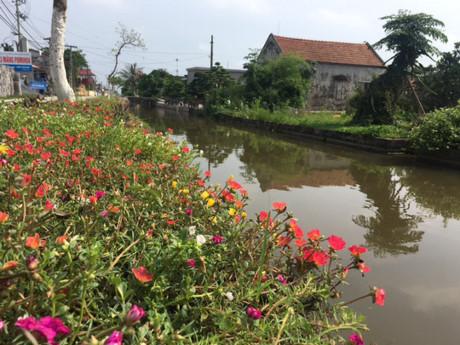 Hoa được trồng ven sông, dọc những con đường bê tông chạy dài các thôn xóm