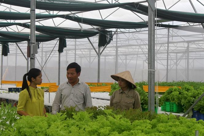 Ông Lưu giới thiệu rau sạch cho khách hàng