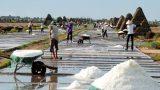 Giao Thủy: Ứng dụng khoa học và công nghệ giúp nâng cao chất lượng 'vàng trắng'