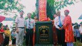 Xuân Trường (Nam Định): Cây Gạo 250 năm tuổi được vinh danh Cây Di sản Việt Nam