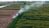 Thơm hương gạo sạch từ vùng đất lúa Nam Định