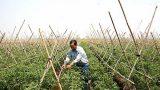 Nam Định tìm đầu ra ổn định cho nông sản