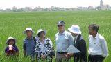 Đại sứ Mỹ đội nắng, lội ruộng cùng nông dân Nam Định