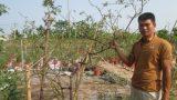 Nam Định: 8X trồng hoa hồng các loại thu tiền tỷ mỗi năm