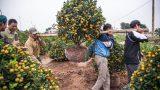 Tết về trên vườn cây cảnh Thành Nam