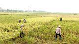 Uỷ ban nhân dân tỉnh triển khai công tác ứng phó với bão số 7 (bão Sarika)