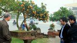 Nam Định: Đẹp mê hồn, quất tiểu cảnh cây đa giếng nước sân đình