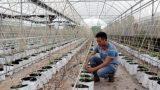 Nông thôn Nam Định đang tiếp cận phát triển ở trình độ cao hơn