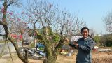Đào, quất được giá, nông dân thành Nam phấn khởi