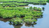 [VIDEO] Một lần trải nghiệm rừng ngập mặn Xuân Thủy
