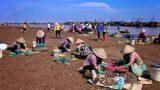 Giao Long: Chợ phiên họp theo…con nước