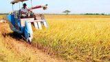 Xây dựng quy chuẩn cho nông sản về Thủ đô