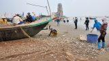 Hải Hậu: Thuyền cá đầy ắp trong những ngày ra khơi đầu Xuân