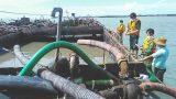 Bắt giữ 3 sà lan do 3 người quê Nam Định vận chuyển cát trái phép trên vùng biển Cần Giờ