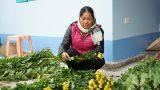 Bắt tay nhau liên kết trồng hoa, nông dân Mỹ Tân thu tiền tỷ