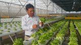 Nam Định: Bỏ phố về quê trồng rau công nghệ cao lãi hơn 1 tỷ/năm.