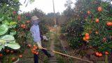 Nam Định: Làm đẹp cho cây cảnh, kiếm tiền triệu mỗi ngày