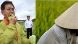 Thấy gì từ xu thế người Nhật đổ xô sang trồng lúa ở châu Á?