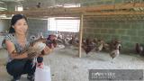 Nam Định: Nuôi loài chim quý mắn đẻ như gà, mỗi tháng bỏ túi hàng chục triệu đồng