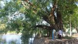 """Nam Định: Khám phá làng cổ Dịch Diệp ngàn năm không đổi tên, ngắm cây """"bổ đề đại lão"""" nghìn tuổi"""