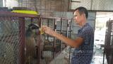 Nam Định: Nuôi loài thú khoái ăn chuối, ăn cháo loãng qua ngày mà ông nông dân này kiếm tiền tỷ