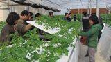 Nam Định: Đẩy mạnh ứng dụng khoa học công nghệ vào thực tiễn