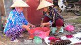 Nghề săn chuột đồng ở Xuân Phong -Xuân Trường – Nam Định