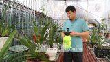 Phong trào trồng hoa lan ở Giao Thủy