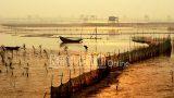 """Nam Định: Đánh thức tiềm năng """"Ramsar Xuân Thủy"""" – Khu dự trữ sinh quyển thế giới"""
