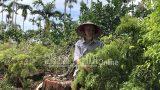 """Nam Định: Đổ xô trồng """"nhân sâm người nghèo"""", giá bán tụt dốc không phanh, nông dân chán hẳn"""