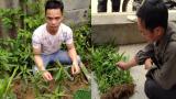 Xử lý các đối tượng quê NAM ĐỊNH trồng cây cần sa trái phép trong vườn nhà