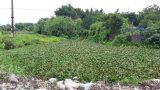 Nam Định: Sông Lèo ô nhiễm nặng ảnh hưởng đến môi trường sống của người dân
