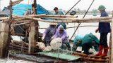 Nam Định Thu tiền triệu từ khai thác 'lộc biển'