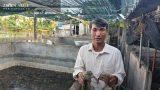 Nuôi toàn con đặc sản, lão nông Nam Định bỏ túi hàng trăm triệu đồng/năm