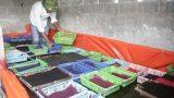 Nam Định : Hiệu quả bước đầu từ mô hình nuôi ốc Nhồi tại Giao Xuân.