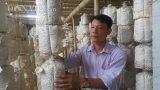 Nam Định: 8x bỏ túi 20 triệu đồng/tháng nhờ …loài nấm trắng như bông
