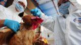 Covid chưa qua, Việt Nam phát hiện cúm gia cầm có thể lây sang người