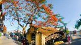 Nam Định: Thực hư kho báu chôn dưới chân cây cầu 500 năm tuổi đẹp nhất Miền Bắc