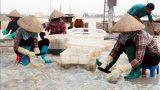 Nam Định : Thu tiền triệu từ khai thác 'lộc biển'