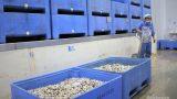 Thủy sản Nam Định tái cơ cấu để phát triển kinh tế biển
