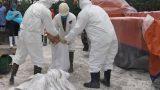 Nam Định : Tiêu hủy gần 10 tấn lợn nhiễm Dịch tả lợn Châu Phi